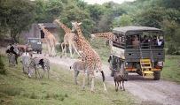 Port Lympne Wildlife Park